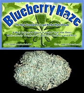 BlueBerry Haze Legal Bud